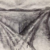 Field Tracks, graphite on paper
