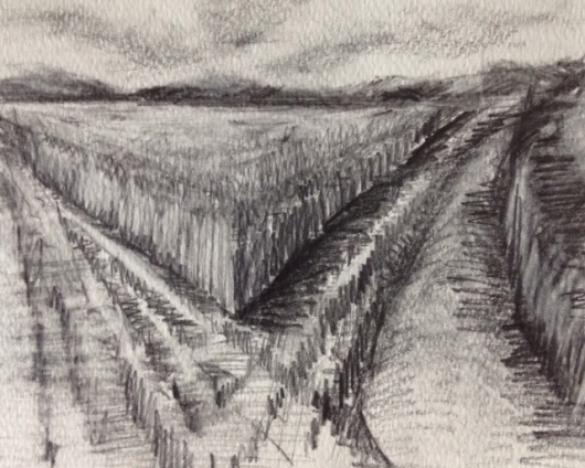 Field Tracks, graphite on paper